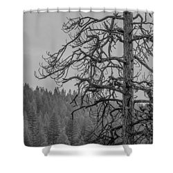 Osprey's Penthouse Shower Curtain