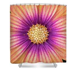 Osteospermum Serenity Blushing Beauty Shower Curtain
