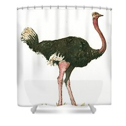 Ostrich Bird Shower Curtain by Juan Bosco