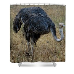 Ostrich In The Grass 1 Shower Curtain