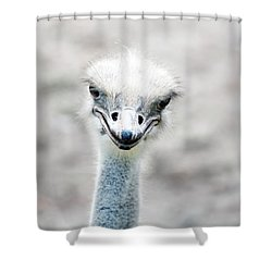Ostrich Shower Curtain by Lauren Mancke