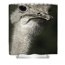 Ostrich Portrait Shower Curtain by Anne Rodkin