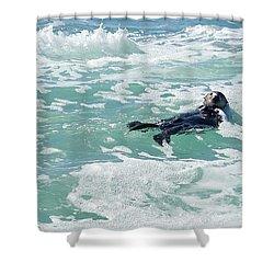 Otter At Montana De Oro Shower Curtain by Michael Rock