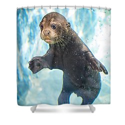 Otter Cuteness Shower Curtain by Jamie Pham