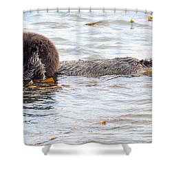 Shower Curtain featuring the photograph Otter Love by AJ Schibig