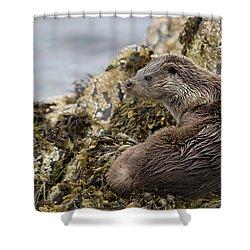 Otter Relaxing On Rocks Shower Curtain