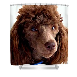 Our Muffin Portrait - 6-months Old Shower Curtain