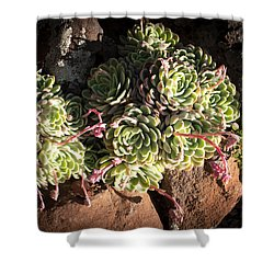 Out Door Succulents Shower Curtain by Catherine Lau