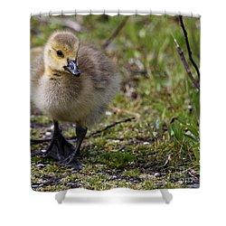 Out For A Stroll Shower Curtain