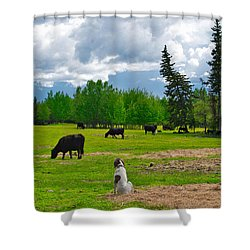 Out In The Pasture Shower Curtain