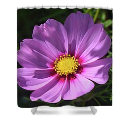 Shower Curtain featuring the photograph Out In The Sun. by Terence Davis