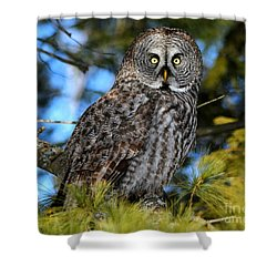 Out Of The Shadows Shower Curtain by Heather King