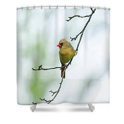 Out On A Limb 2 Shower Curtain