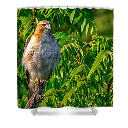 Shower Curtain featuring the photograph Out On A Limb 3 by Brian Stevens