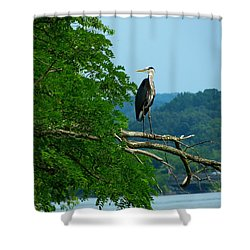 Out On A Limb Shower Curtain by Donald C Morgan