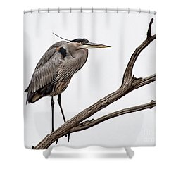 Out On A Limb Shower Curtain by Tamera James