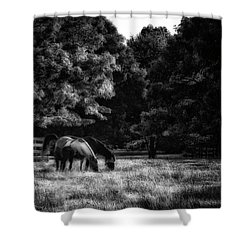 Shower Curtain featuring the photograph Out To Pasture Bw by Mark Fuller
