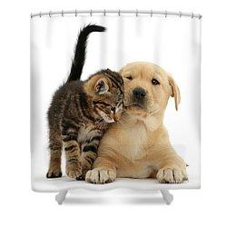 Over Friendly Kitten Shower Curtain