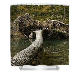 Over On Clover Shower Curtain by Randy Bodkins