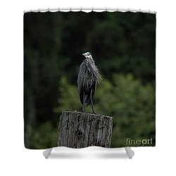 Overlooker  Shower Curtain by Rod Wiens
