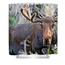 Shower Curtain featuring the photograph Overlooking Moose by Scott Mahon