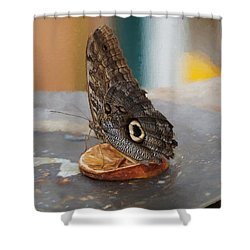 Shower Curtain featuring the photograph Owl Butterfly-1 by Paul Gulliver