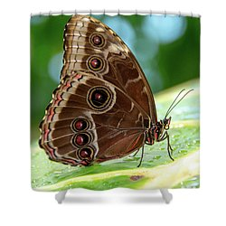 Owl Butterfly Shower Curtain