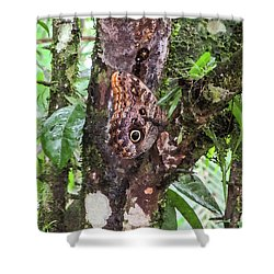 Owl Butterfly On A Tree Shower Curtain