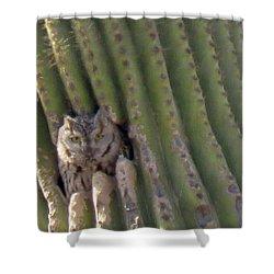 Owl In Cactus Burrow Shower Curtain
