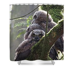 Owl Morning Shower Curtain