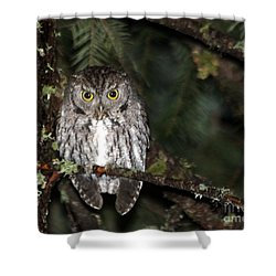 Owl Northern Pygmy  Shower Curtain