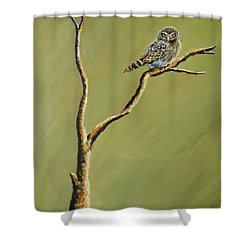 Owl On A Branch Shower Curtain