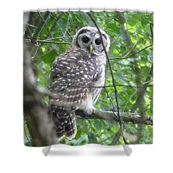 Owl On A Limb Shower Curtain by Donald C Morgan
