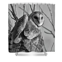 Owl Whites Shower Curtain