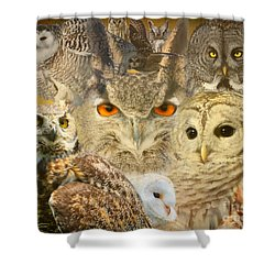 Owl You Need Is Love Shower Curtain