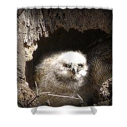 Owlet Shower Curtain