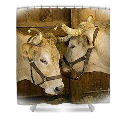 Oxen Team Shower Curtain