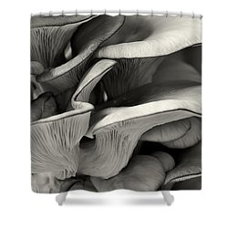 Oyster Mushroom Abstract Lv Shower Curtain by Shirley Mitchell