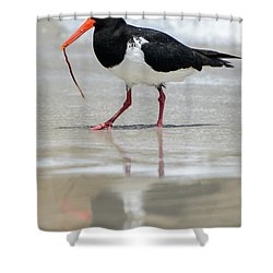 Oystercatcher 03 Shower Curtain