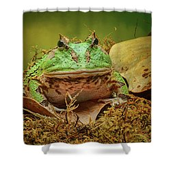 Shower Curtain featuring the photograph Pac Man - Frog by Nikolyn McDonald