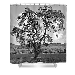 Pacheco Pass Shower Curtain