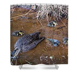 Shower Curtain featuring the photograph Pacific Black Duck Family by Miroslava Jurcik