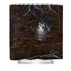 Shower Curtain featuring the photograph Pacific Black Duckling by Miroslava Jurcik