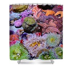 Pacific Ocean Reef Shower Curtain