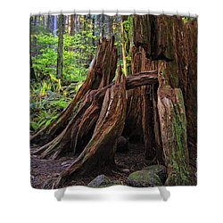 Pacific Rainforest Old And New Shower Curtain