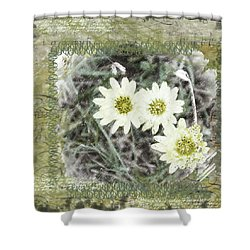 Package Of Three Shower Curtain by Nadine Berg