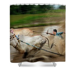 Pacu Jawi Bull Race Festival Shower Curtain