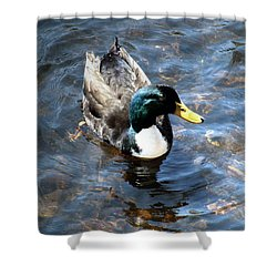 Paddling Peacefully Shower Curtain by RC DeWinter