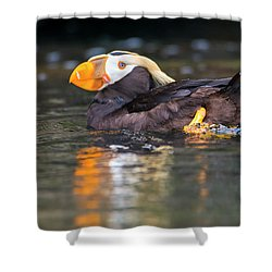Paddling Puffin Shower Curtain