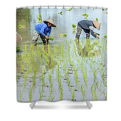 Paddy Field 1 Shower Curtain by Werner Padarin
